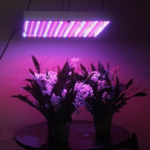 Is Hydroponics in Indoor Gardening Easier With LED Grow Lights?