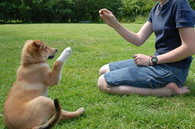 DIY BASIC DOG TRAINING TIPS