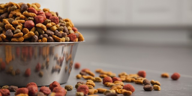 DIY PET FOOD OPTIONS: Commercial Products vs DIY Foods