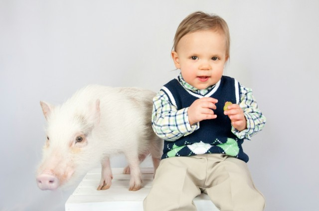 What to Consider when Purchasing a Pixie or Teacup Piglet