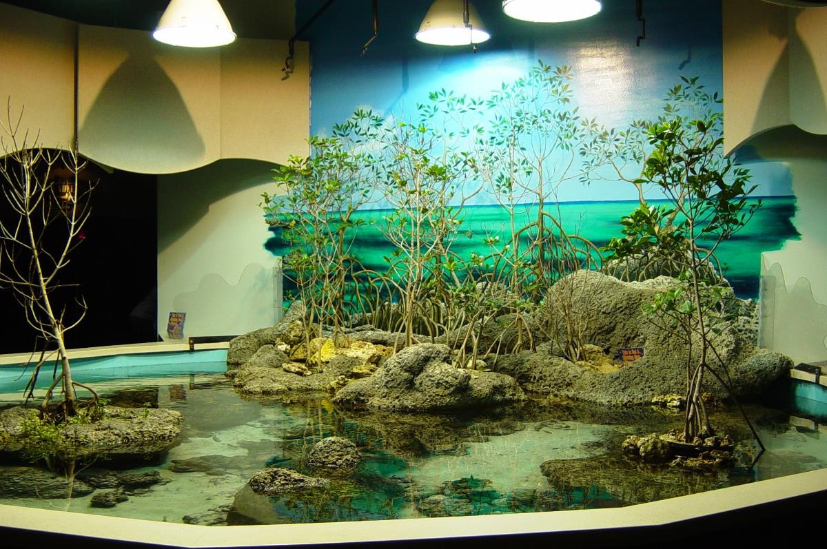 No Fishing Inside Get An Aquarium To Make Your Home A Truly - Fish tank designs for home